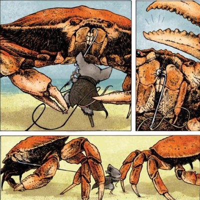 Petersen Mouse Guard crab fighting