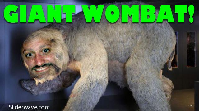 giantwombat
