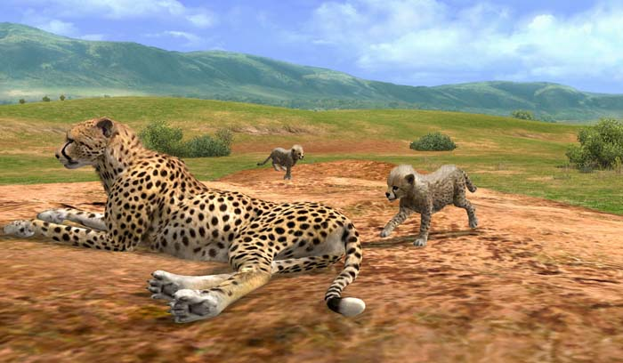 Afrika Cheetah