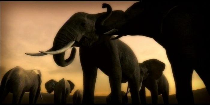 afrika elephant