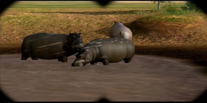 afrika hippo