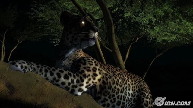 afrika leopard