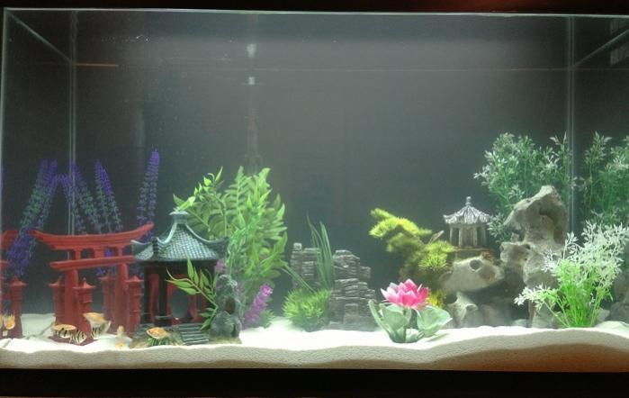 kuga fish tank