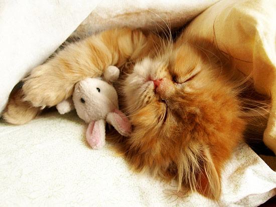 Yawn Kitty.jpg