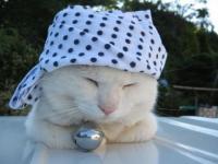 Stealthcat's Photo