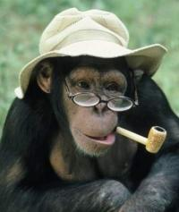 MonkeySeeker's Photo