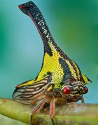 frogkopf's Photo