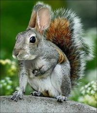Squabbit's Photo