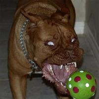 aScaryDog's Photo